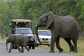 Zimbabwe Road block